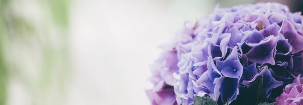 18 Flores de Inverno para Plantar em Casa ou no Jardim